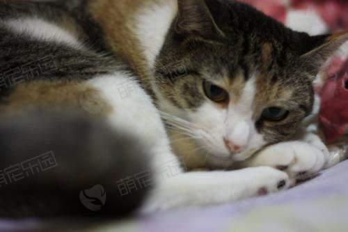 猫咪为什么一直喜欢蹲着?